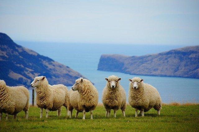 ニュージーランドで看護師になるには?資格や日本との違いを解説!